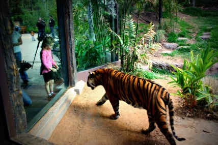 tiger-trail-exhibit-at-the-san-diego-zoo-safari-park