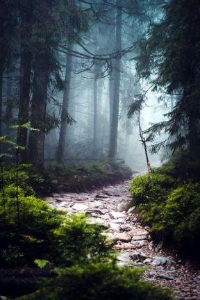 path boredart